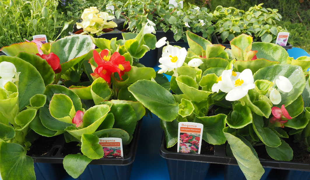 17th barrow st perran 39 s scout group blog archive for Plants for sale